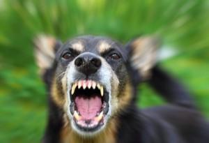 dog-growling-shutterstock_109331033