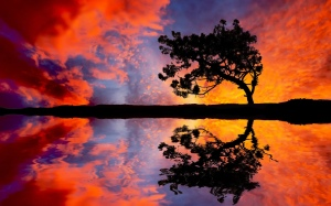 Tree-Sunset-Reflection